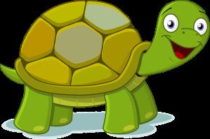 2019.08 Tortoise_PBay